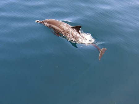 27. Delfin in saritura.JPG
