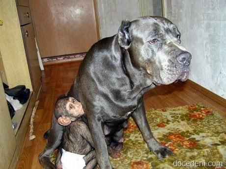 macaco e cadela3
