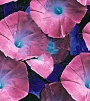BackgroundBluePink-0600-ElTallerdeLabrujaMar