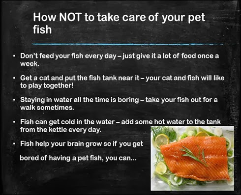 How NOT to look after your fish