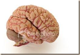 istockphoto_193382-brain