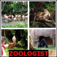 ZOOLOGIST- Whats The Word Answers