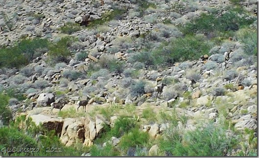 03 Mt Sheep along Colorado River trip GRCA NP AZ (1024x620)