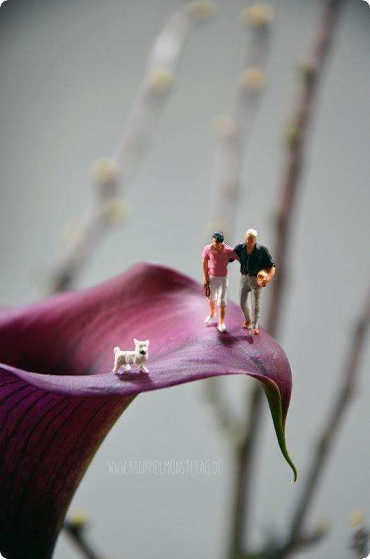 Hunderunde (01) auf der lila Calla am kleinen Dienstag