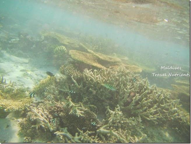 馬爾地夫 沙洲 浮潛 (3)