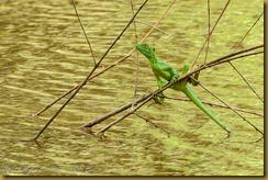 Green Basilisk