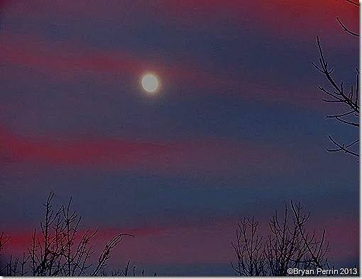 dusk moon above branchs