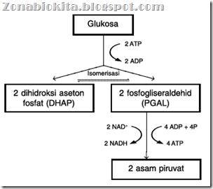 Rangkaian proses Glikolisis