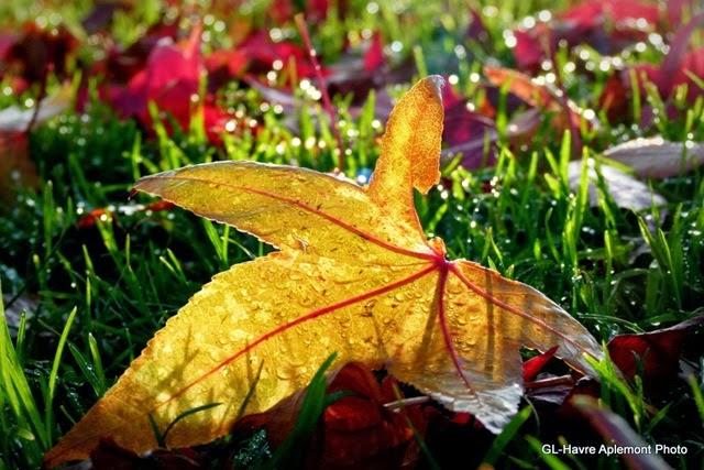 caucriauville automne 011