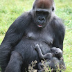 zoo_kolmarden_8884.jpg