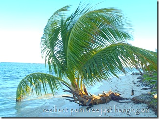 Nicholas Cay, Belize