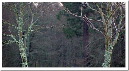 8 Dec 6 05-01-2012 11-12-54.ORF