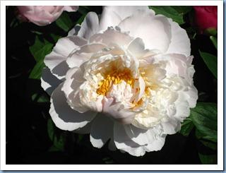 20110614_garden_008