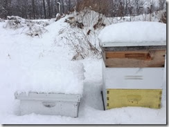 Winterhives
