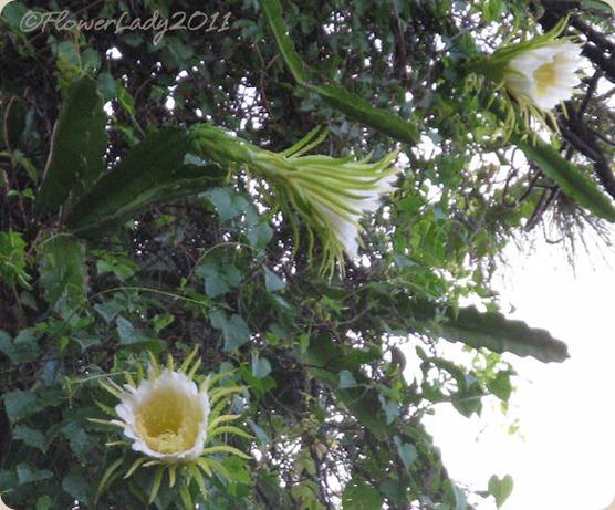 09-22-night-blm-cactus