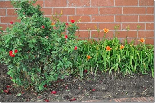 06-08-13 flowers 2