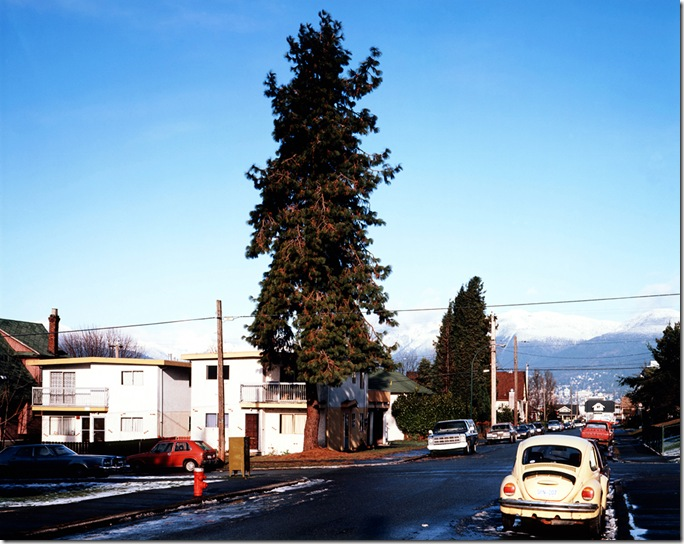 jeff wall_The Pine on the Corner_1990