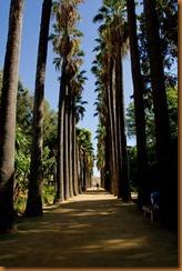 Fes, garden palms