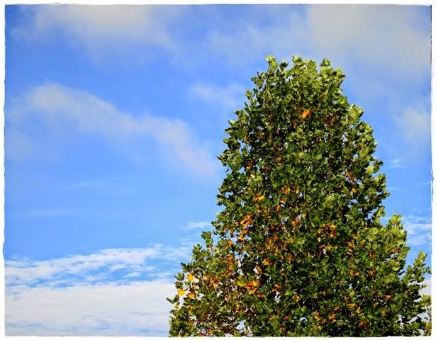 treeframeIMG_8709