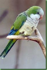 aves11