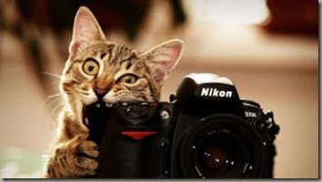 cat-biting-nikon-d700-wallpaper-300x168