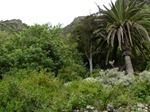 bosque termófilo
