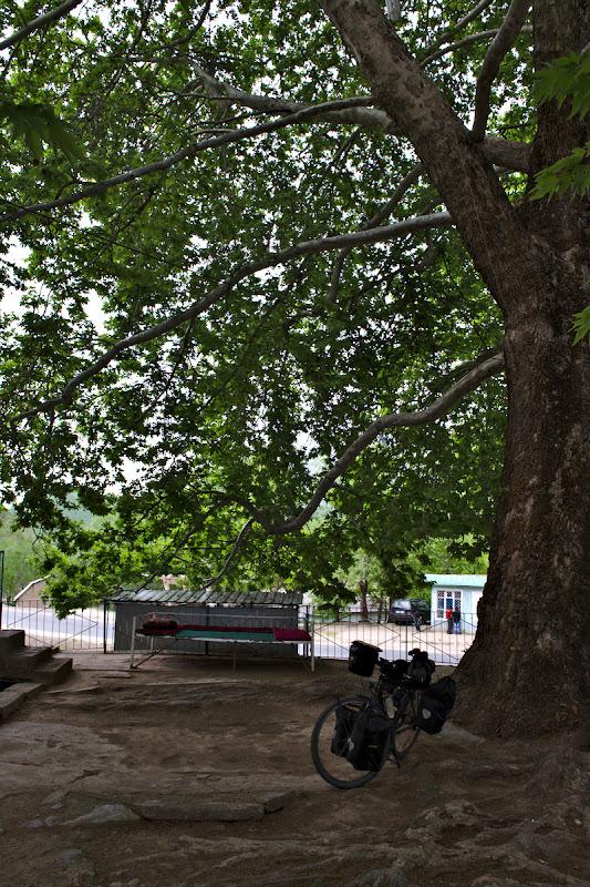 Si micul restaurant la umbra unui copac imens.