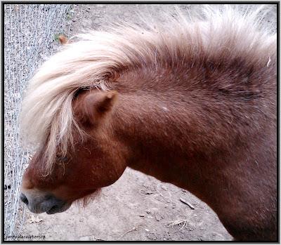poneiul punker.jpg