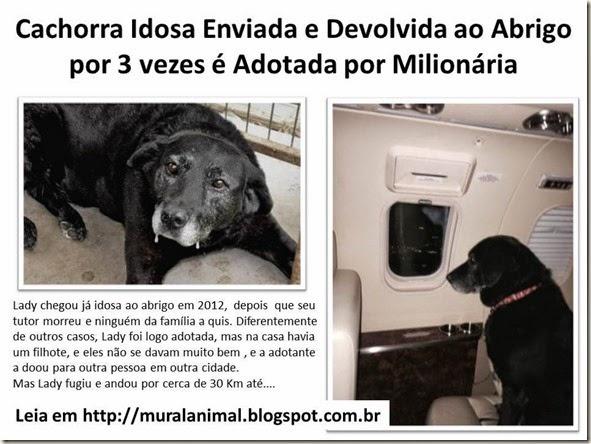 Cachorra Idosa Enviada e Devolvida ao Abrigo por