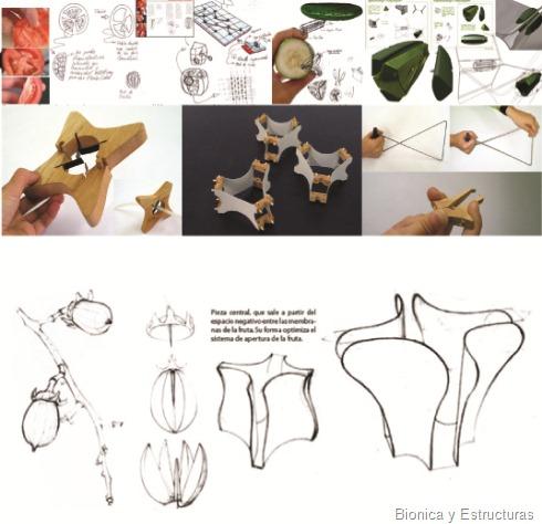 bionica y estructura