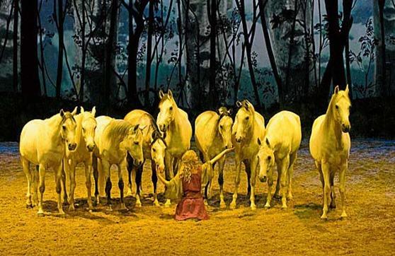 2014_10_horses_gallery