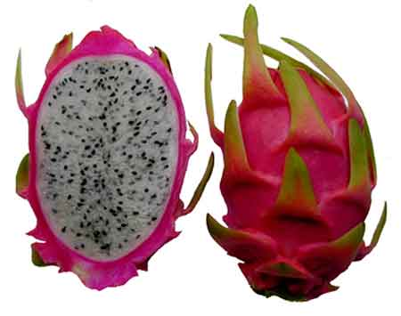 beraneka-macam-asal-usul-buah-naga-dan-manfaatnya-bagi-kesehatan