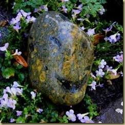 Rock Smiley, 7