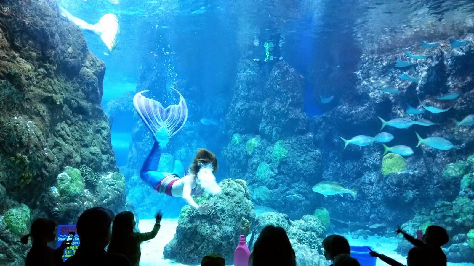 Explore Colorado The Downtown Aquarium Mystic Mermaids