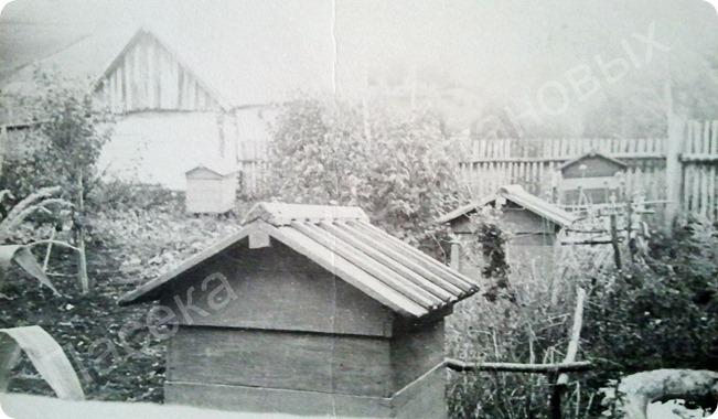 Пасека Султановых 1950 год