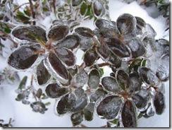 snowstorm1201_67