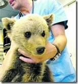Villarina en el veterinario
