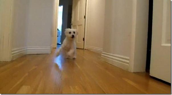 Cachorro cego abandonado encontrou uma nova familia (17)