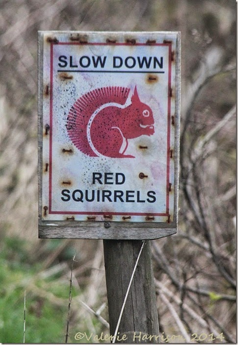 17-squirrel-sign