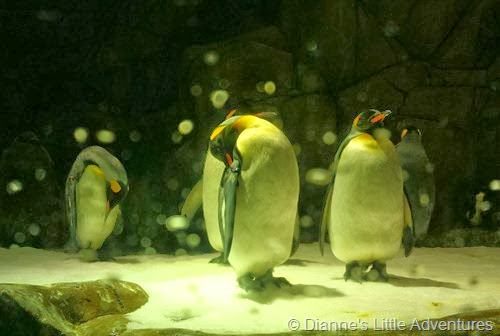 hong kong, ocean park, family, love, penguin, south pole,south pole spectacular, king penguin