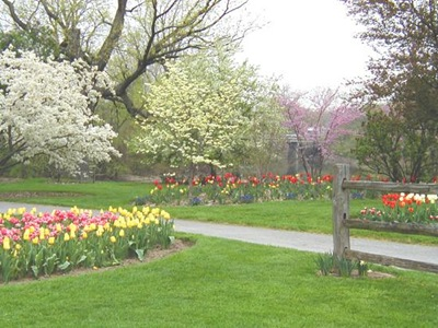 foster-park-in-spring