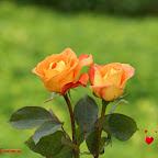 angkorsite_flower_1 (115).jpg