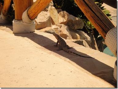 2.  Lizard