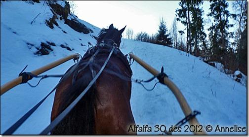 2012-des30-alf_04