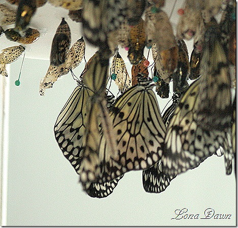 FPC_Butterfly_Chrysalis_Paper_Kite