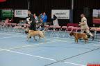 20130511-BMCN-Bullmastiff-Championship-Clubmatch-2615.jpg