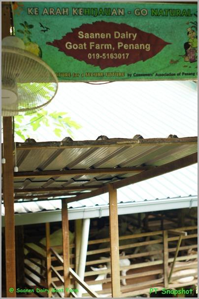 Saanen Dairy Goat Farm Penang