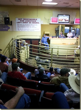 Nacogdoches livestock auction (2)