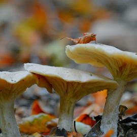 Trio  by Dragan Rakocevic - Nature Up Close Mushrooms & Fungi