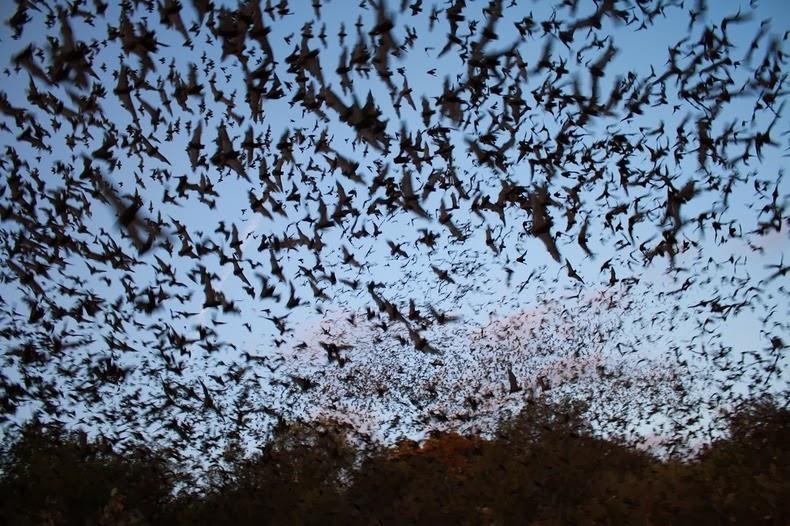 bracken-bat-cave-11